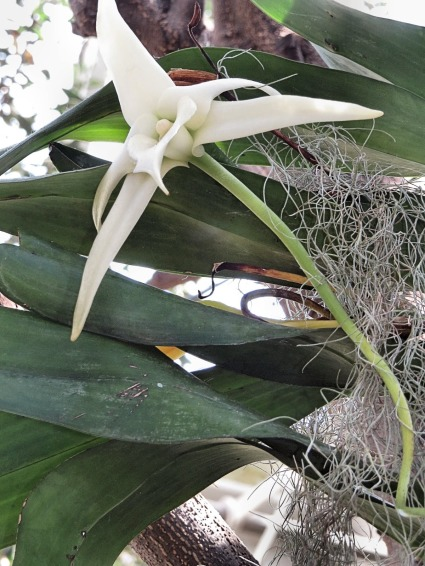 2014-03-20 - Darwins Orchid - NY Orchid Show 2