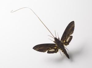giant-sphinx-moth-4x6-300x222